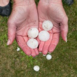 Image for How To Handle A Hail Claim post
